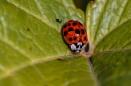 Ladybird in the rain by civitas