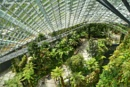The Cloud forest by ColleenA