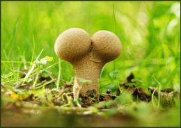 My fertile garden