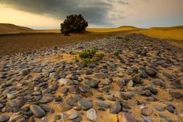 Gran Canaria Pebbles