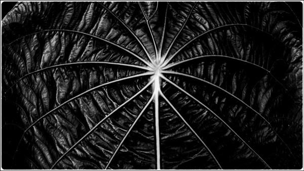 dark leaf by FabioKeiner