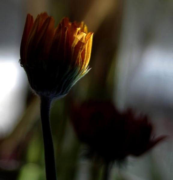 Light....... by Mollycat