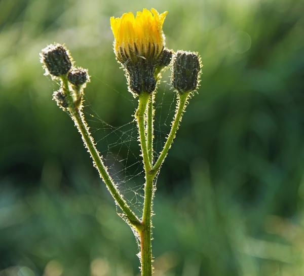 Sunlit yellow