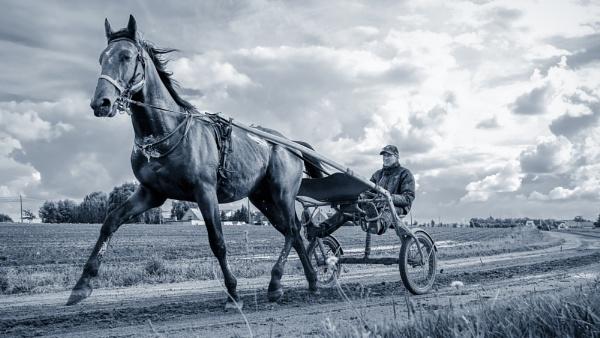 Denim blue Horse