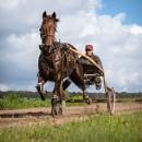 Horses DOF & POV series of 3 by Drummerdelight