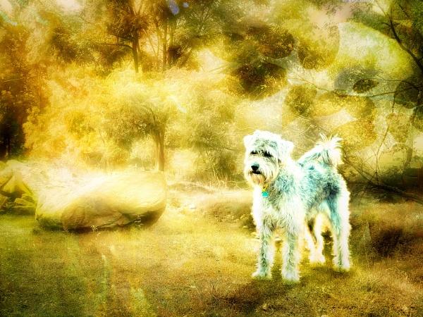 Dog, mk 2