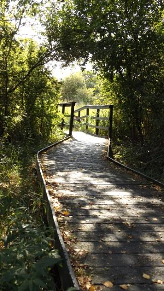 Wicken Fen, follow the path .... by JacquelineS