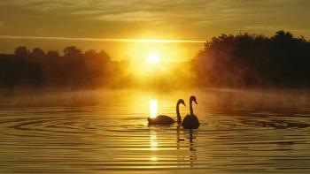 Sunrise Sweethearts