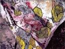 Lichens by mudge