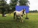 Horse in field by happysnapperman