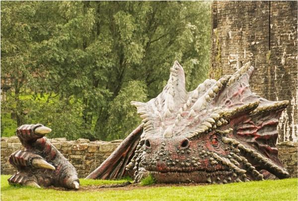 Enter the dragon. by franken