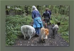 Companionable Canines