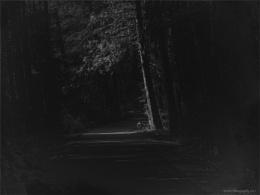 In the Deep Dark Forest