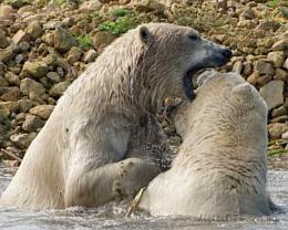 Playful Polars