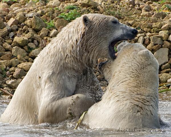 Playful Polars by Alan_Baseley