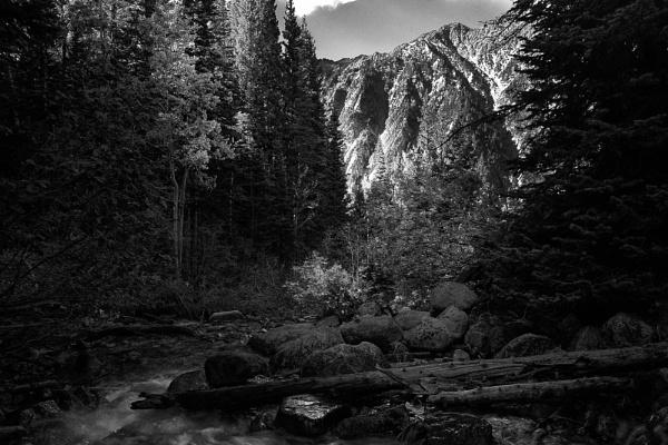 White Pine by mlseawell
