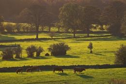 Autumn shadows, Nidderdale
