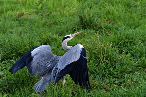 Heron by ANNDORASBOX