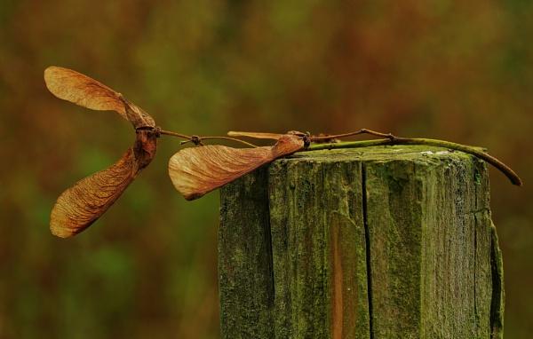 A early Autumn image by georgiepoolie