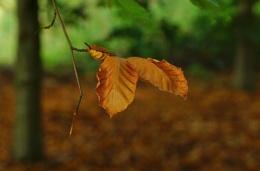 Autumn image 2