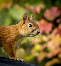 The Squirrels adventure.