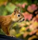 The Squirrels adventure. by kuvailija