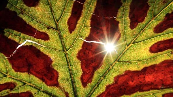 Early Autumn light by David_Cory