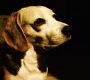 My dog Fugu by laura1