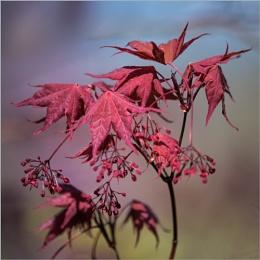 Autumnal Reds