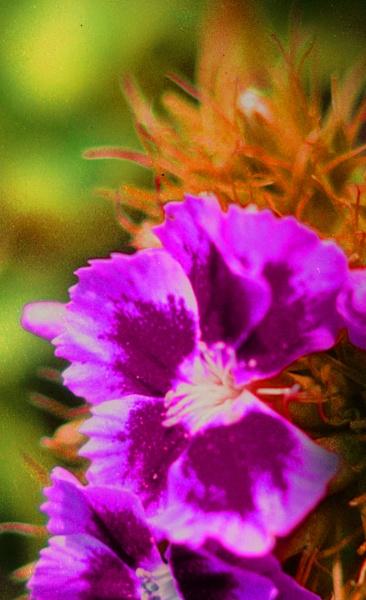 FLOWER by SOUL7