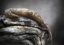 Wood Slug by Dave_Henderson