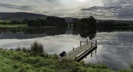 A dog, bird and a lake