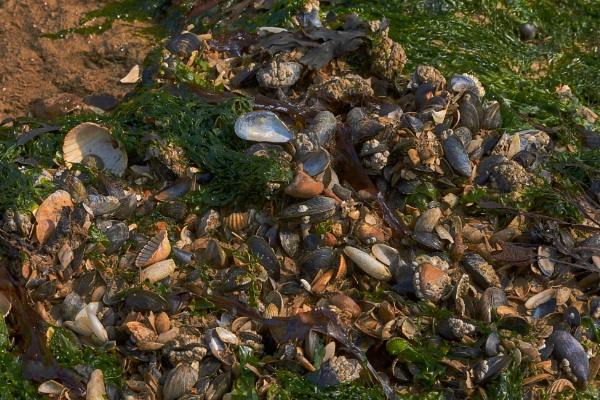 Seashells On The Seashore by JJGEE