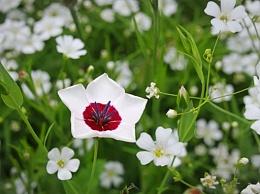 Flower Meadow (Detail)