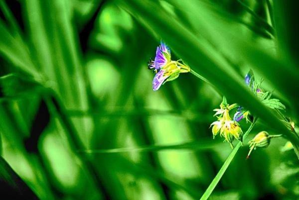 Bokeh green by KrazyKA