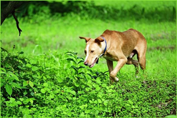 *** Hunting Dog *** by Spkr51
