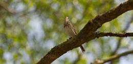 Bird on Bokeh