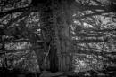 Tree by sjr