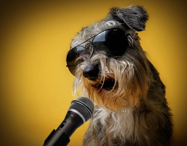 Rock Dog by deesel