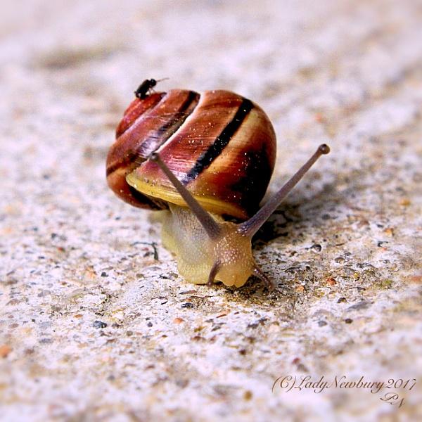 Get off ant! by ladynewbury