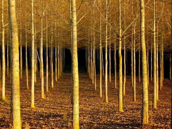 Symmetry of trees by jerseygirl65