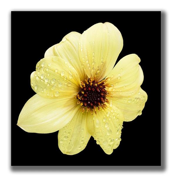 FLOWER 2 by MikeGillingham
