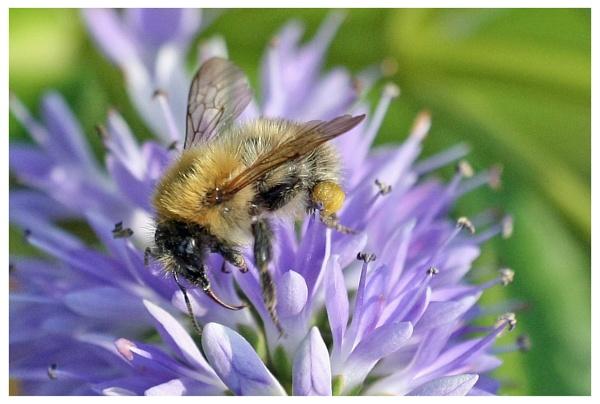 bee careful by davidgibson