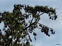 Bats in daytime