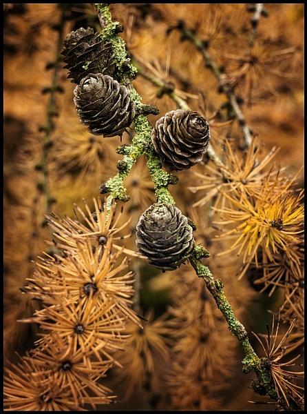 Autumn Fruits. by Niknut