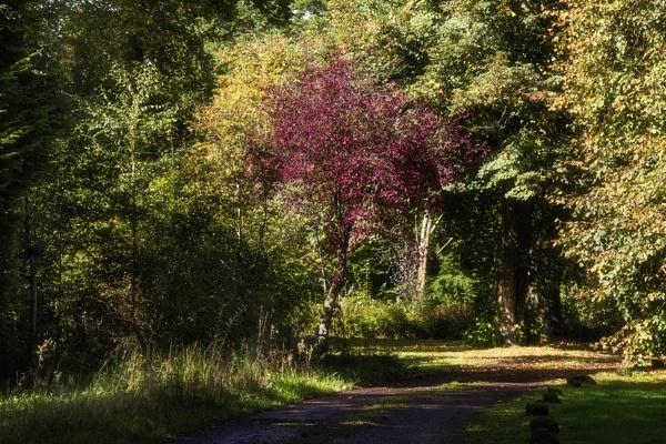 Autumn Path by Irishkate