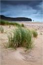 Sandwood Grass by jeanie