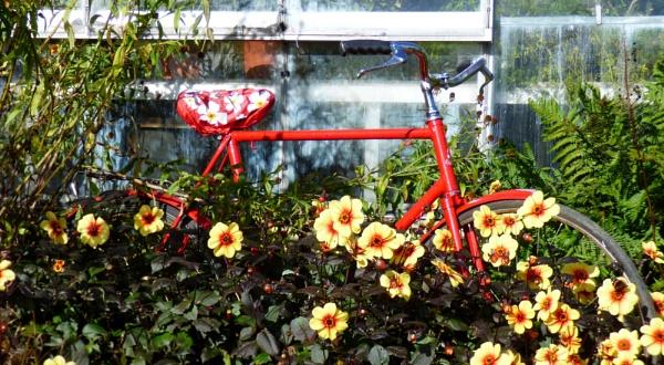 Flower power by kevlense