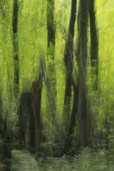 North Wood ICM by Fernowl