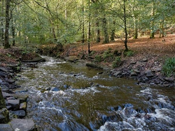 Roddlesworth Woods 401 by jim_horsfield
